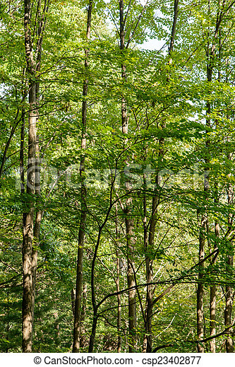 trees in a forest - csp23402877