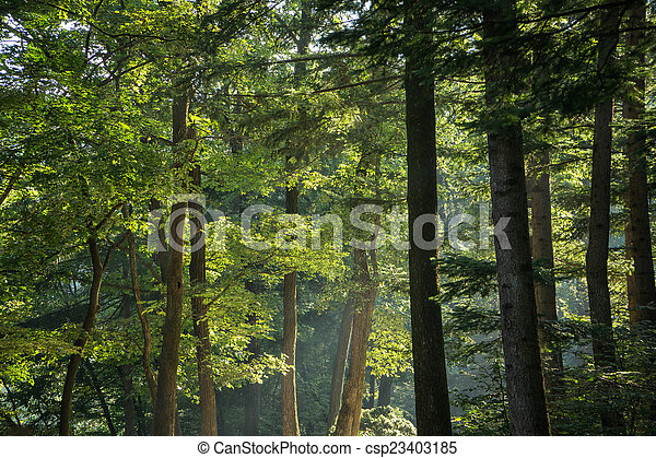 trees in a forest - csp23403185