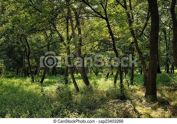 trees in a forest - csp23403266