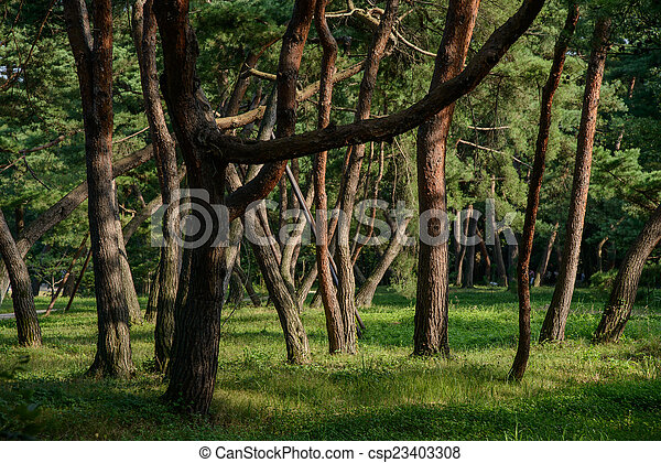 trees in a forest - csp23403308