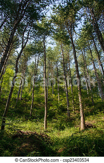 trees in a forest - csp23403534