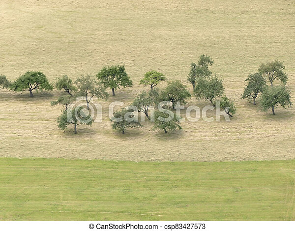 trees in a meadow with hay - csp83427573