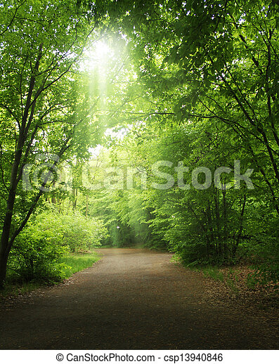 trees in a summer forest  - csp13940846