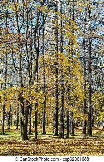 trees in an autumn park - csp62361688