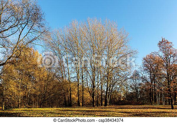 trees in autumn park - csp38434374