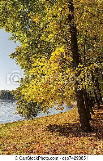 trees in autumn - csp74293851