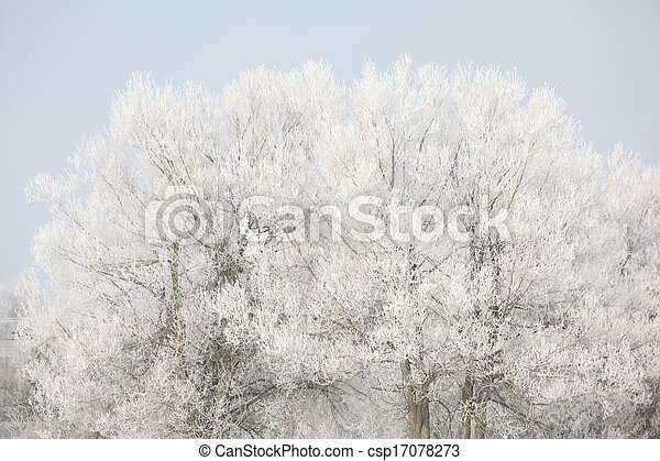 Trees in beatufiul hoarfrost - csp17078273