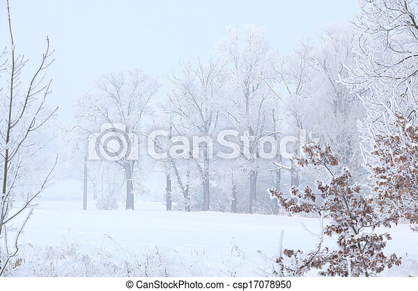 Trees in beautiful hoarfrost and with fog - csp17078950