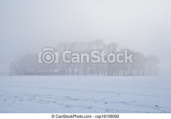 trees in dense winter fog - csp16106092
