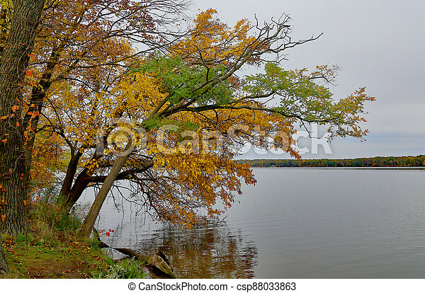 Trees in fall colors leaning over a lake edge - csp88033863