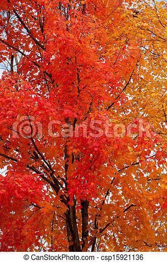Trees in Fall Colors - csp15921136