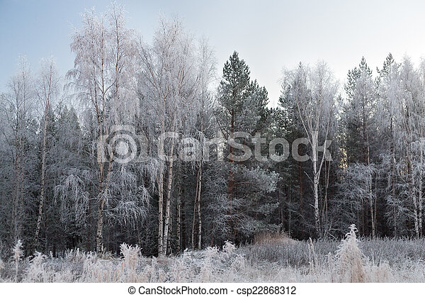 Trees in hoarfrost - csp22868312