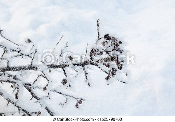 Trees in Hoarfrost - csp25798760