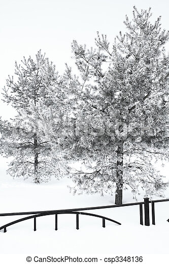 trees in hoarfrost - csp3348136