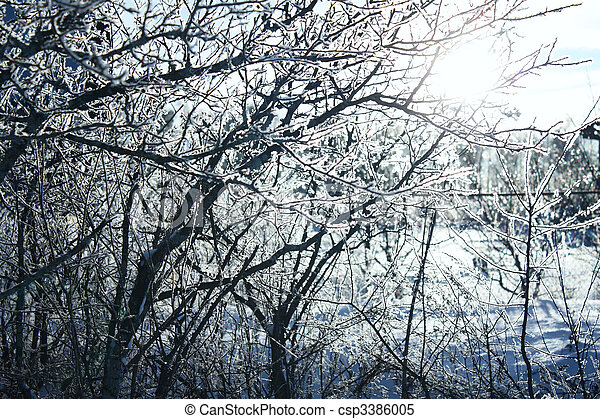trees in hoarfrost - csp3386005