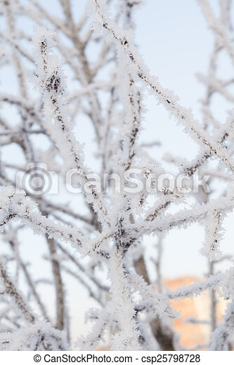 Trees in Hoarfrost - csp25798728