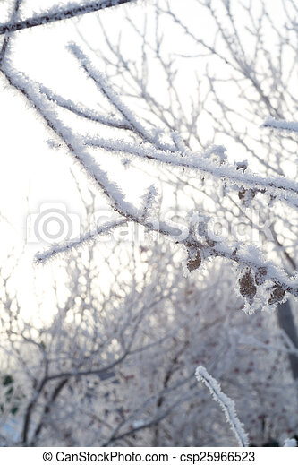 Trees in Hoarfrost - csp25966523