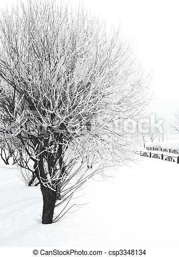 trees in hoarfrost - csp3348134