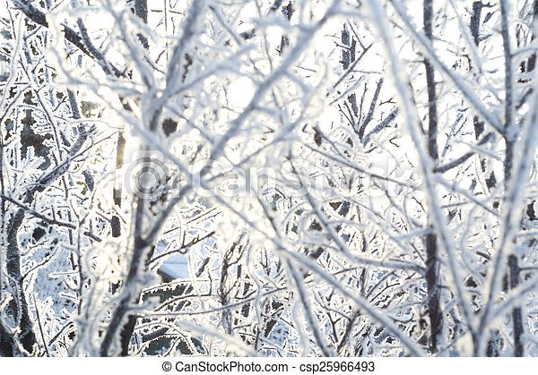 Trees in Hoarfrost - csp25966493