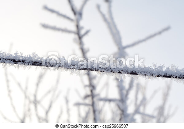 Trees in Hoarfrost - csp25966507