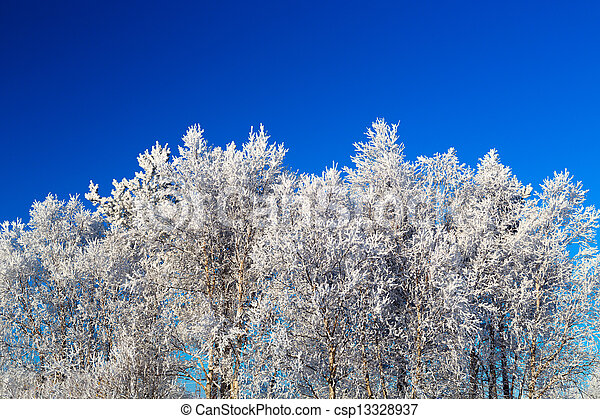 Trees in hoarfrost - csp13328937