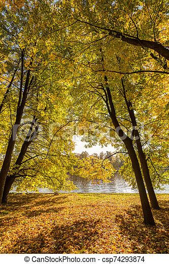 trees in the autumn park - csp74293874