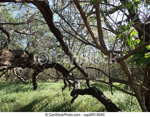 trees in the beach forest - csp26518940