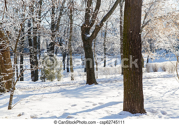 Trees in the frost in the city Park. Winter in town. - csp62745111