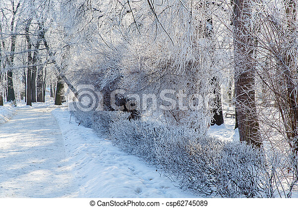 Trees in the frost in the city Park. Winter in town. - csp62745089