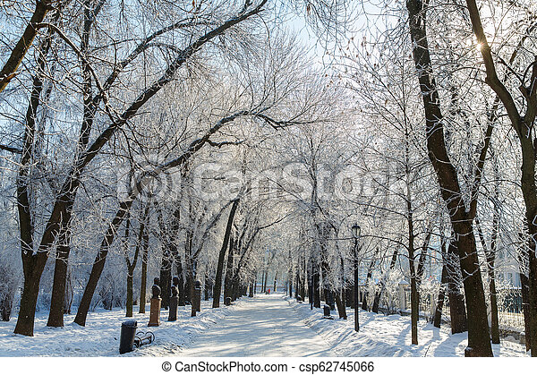 Trees in the frost in the city Park. Winter in town. - csp62745066