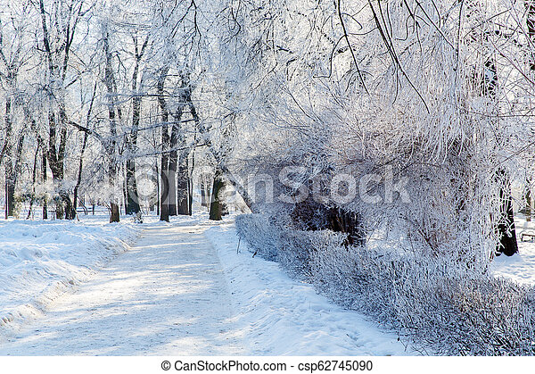 Trees in the frost in the city Park. Winter in town. - csp62745090