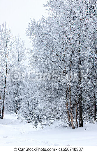 trees in the hoarfrost - csp50748387