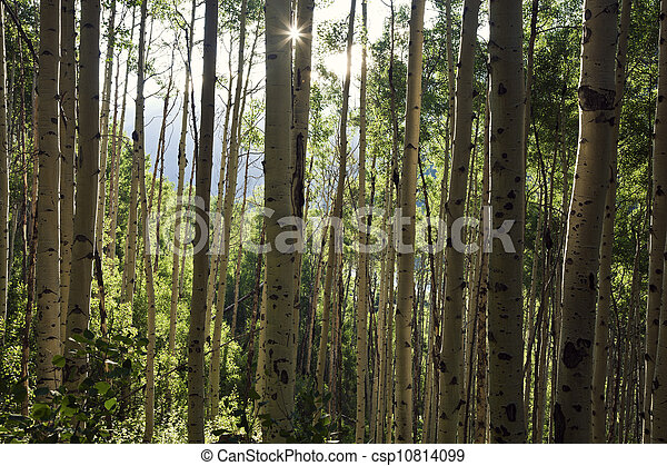 Trees in the mountains - csp10814099