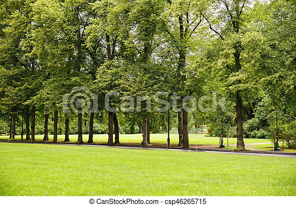 Trees in the park - csp46265715