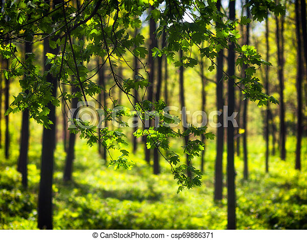 Trees in the park - csp69886371