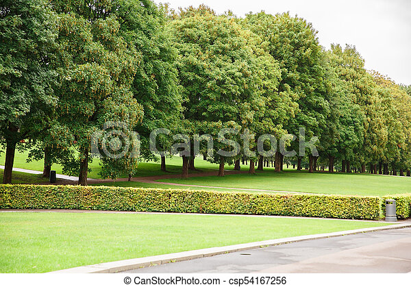 Trees in the park - csp54167256