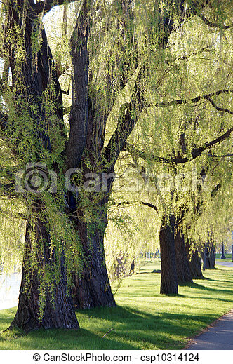 Trees in the park - csp10314124
