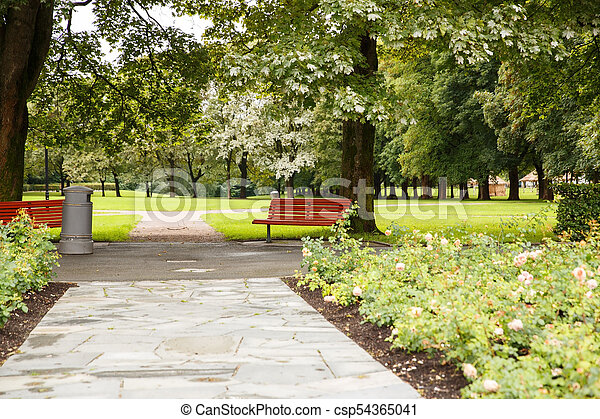 Trees in the park - csp54365041