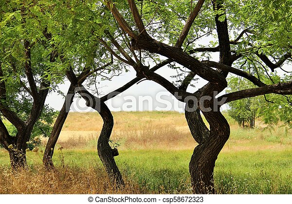 trees in the park - csp58672323