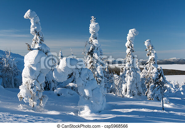 trees in the snow - csp5968566