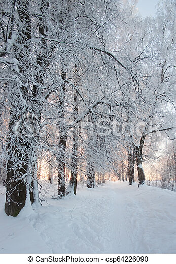 Trees in the snow - csp64226090