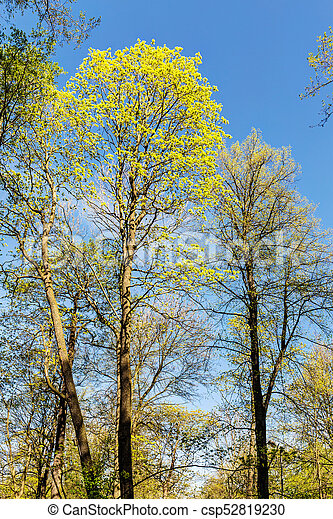trees in the spring - csp52819230