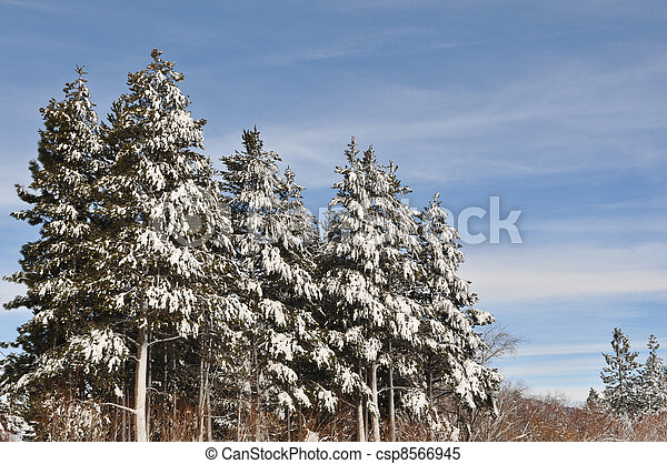 Trees in the Winter - csp8566945