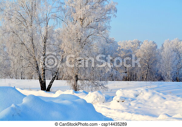 Trees in white hoarfrost - csp14435289