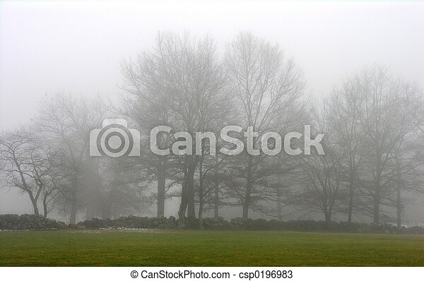 Trees in winter fog. - csp0196983