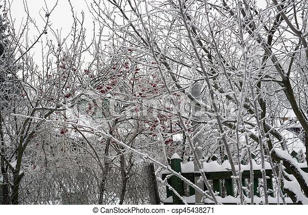 Trees in Winter - csp45438271