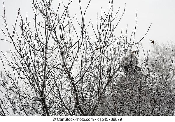 Trees in Winter - csp45789879