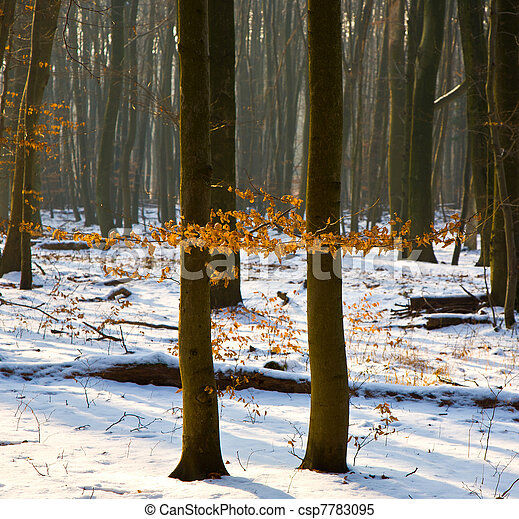 trees in winter  - csp7783095
