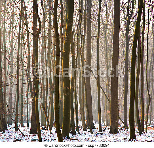 trees in winter  - csp7783094