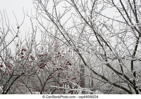 Trees in Winter - csp44006234